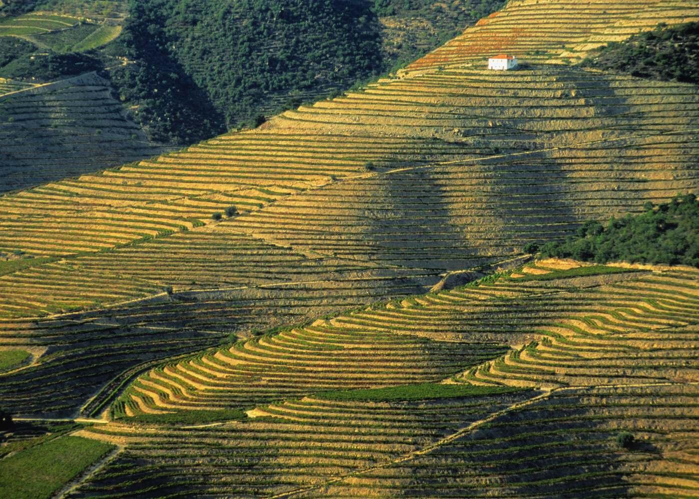 Paisagem de vinhas entre o Pinhão e o Pocinho