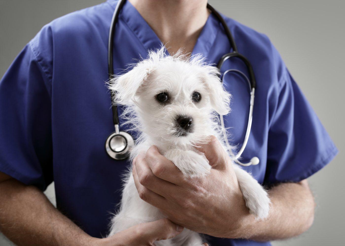 Cuidados a ter com o coronavírus em pets