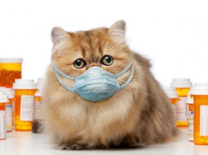 Risco de coronavírus em pets