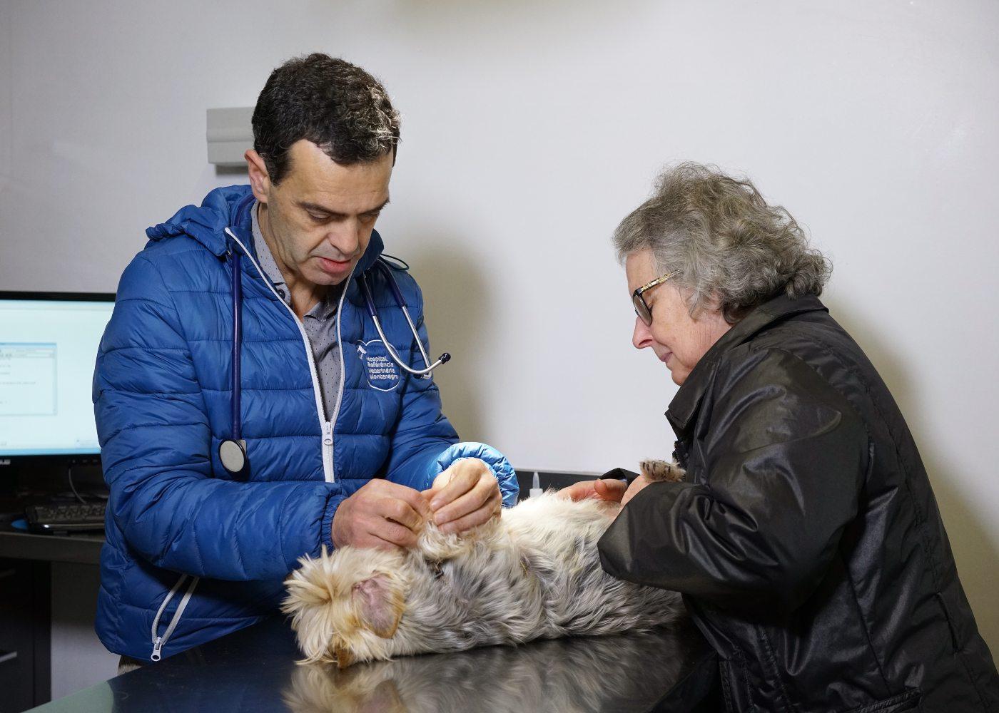 Consulta de veterinário