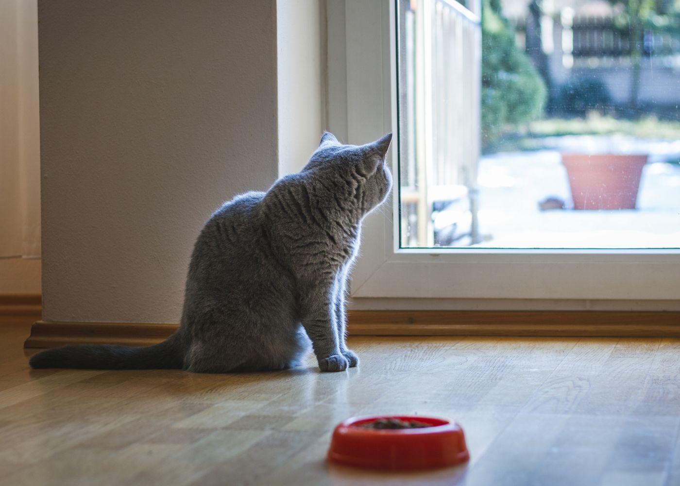 gato a olhar pela janela