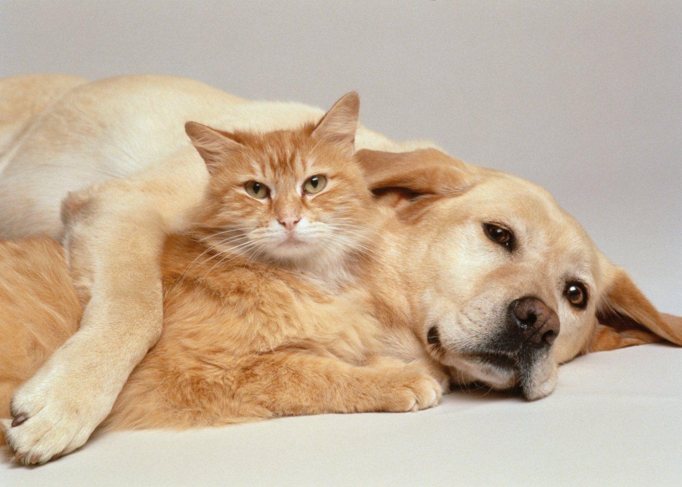 Cão e gato descansam juntos