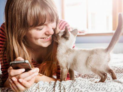 Animais infectados com covid-19 não representam perigo