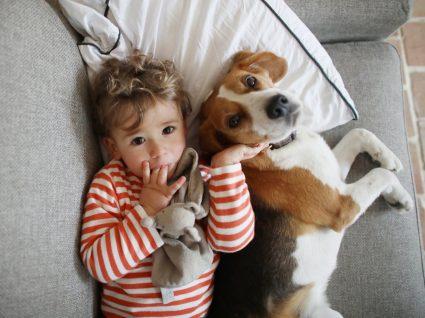 Animais em isolamento felizes