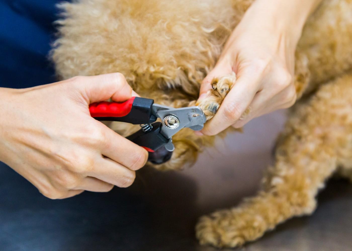 Mulher a cortar unhas do cão