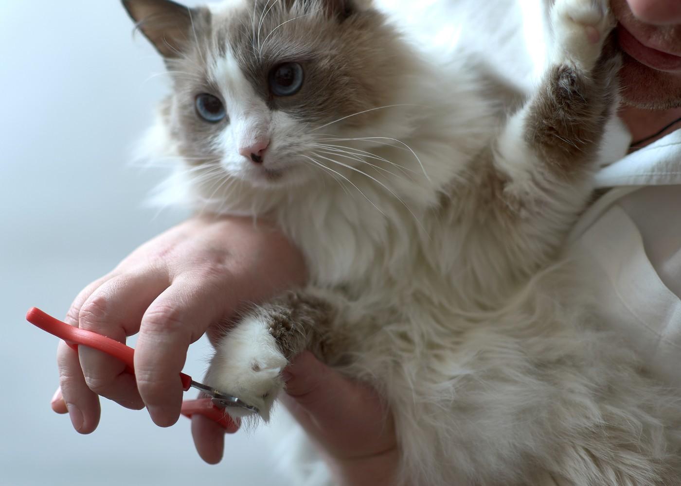 Homem a cortar as unhas do gato