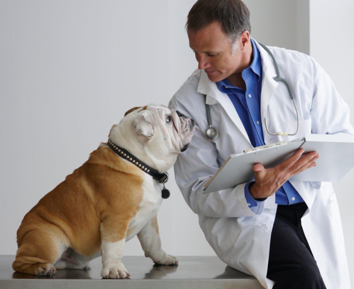 Cão a olhar para o veterinário