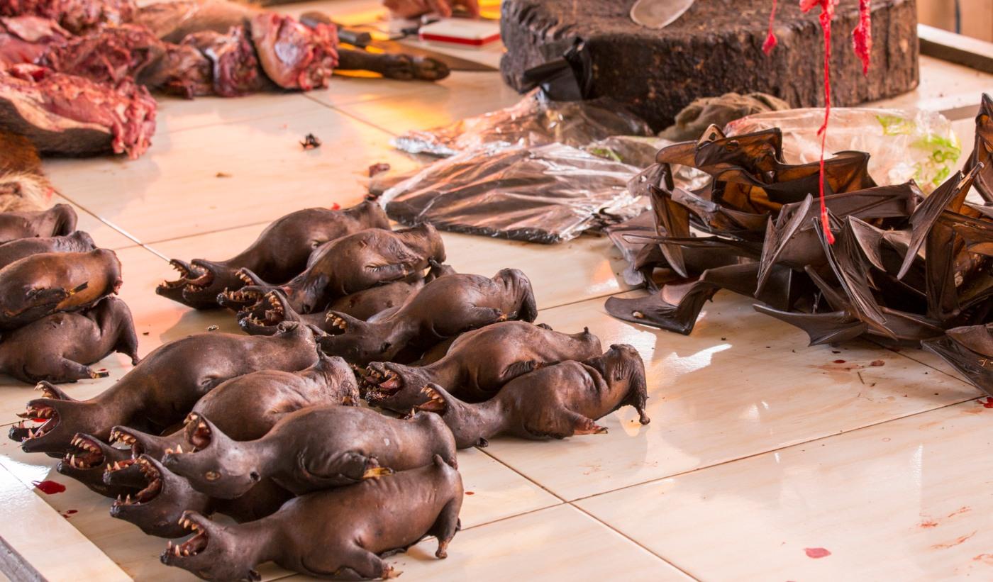 Morcegos nos wet markets