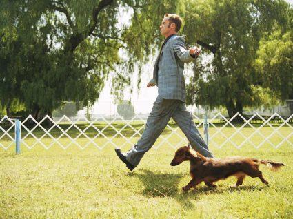 Homem a passear animal de estimação