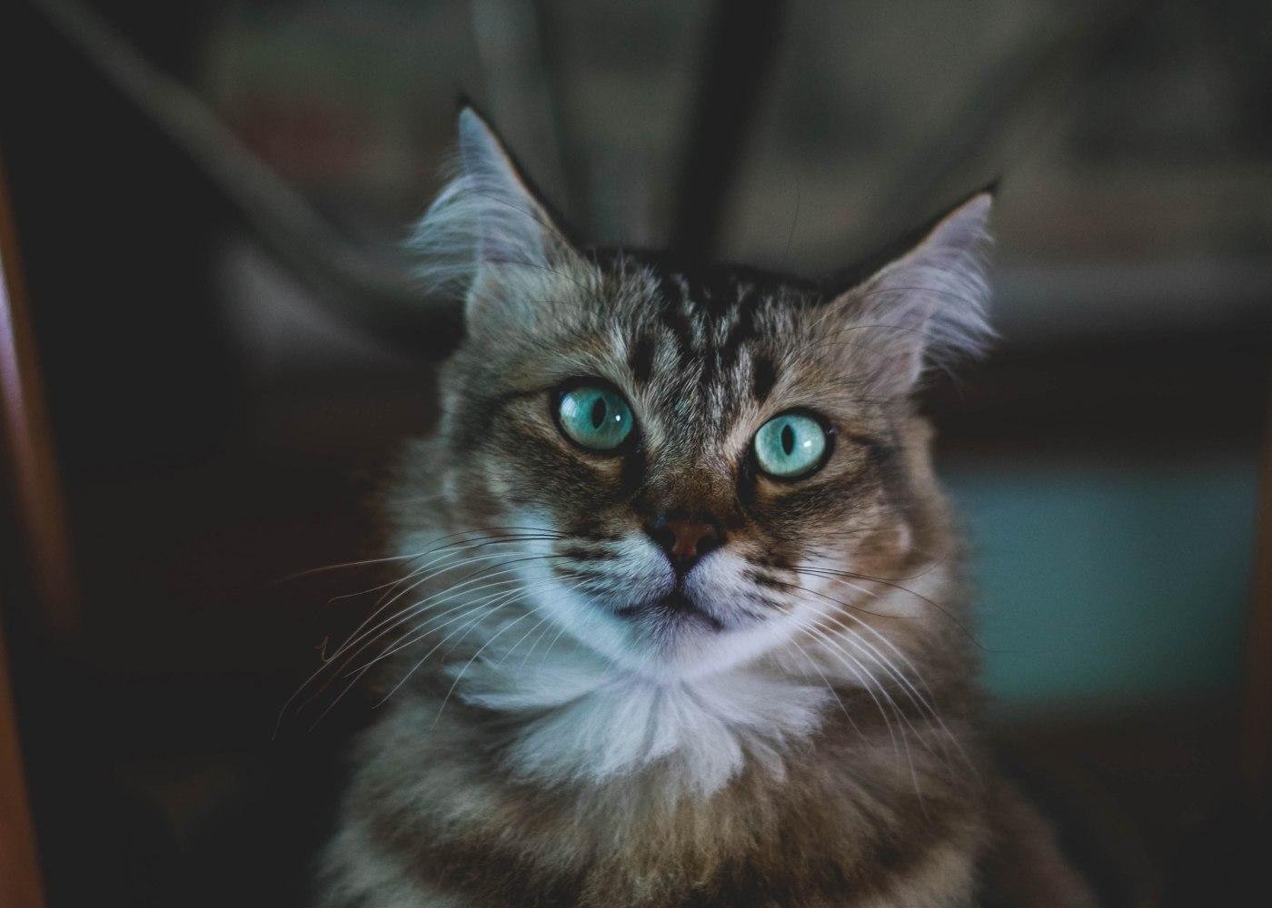 Gato de olhos verdes