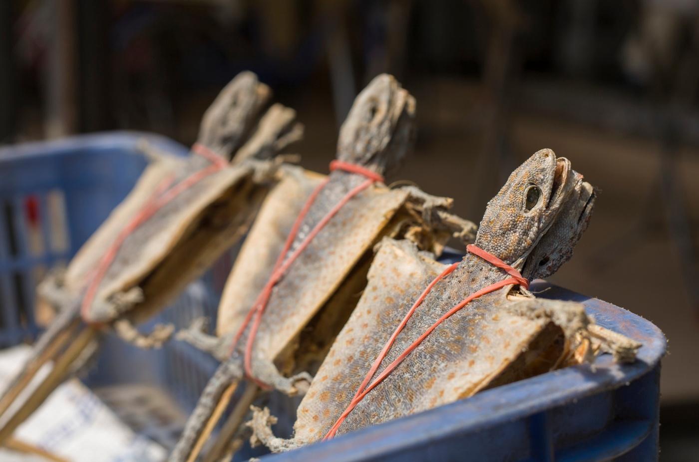 tartaruga para consumo nos wet markets
