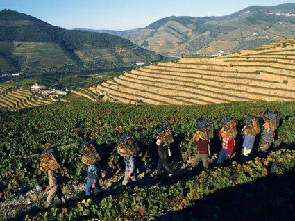 Adegas na região do Douro