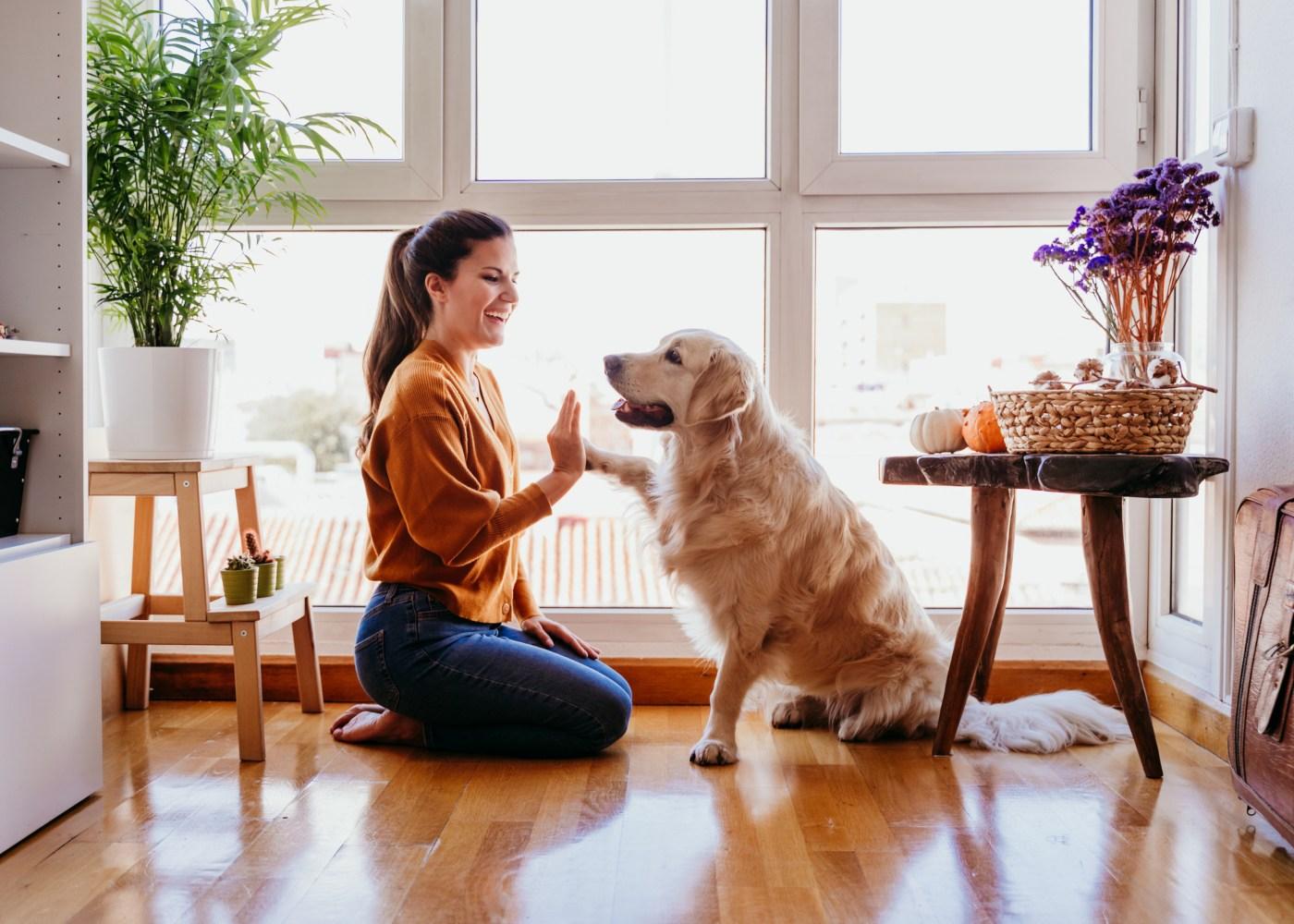 Mulher a brincar com o seu cão