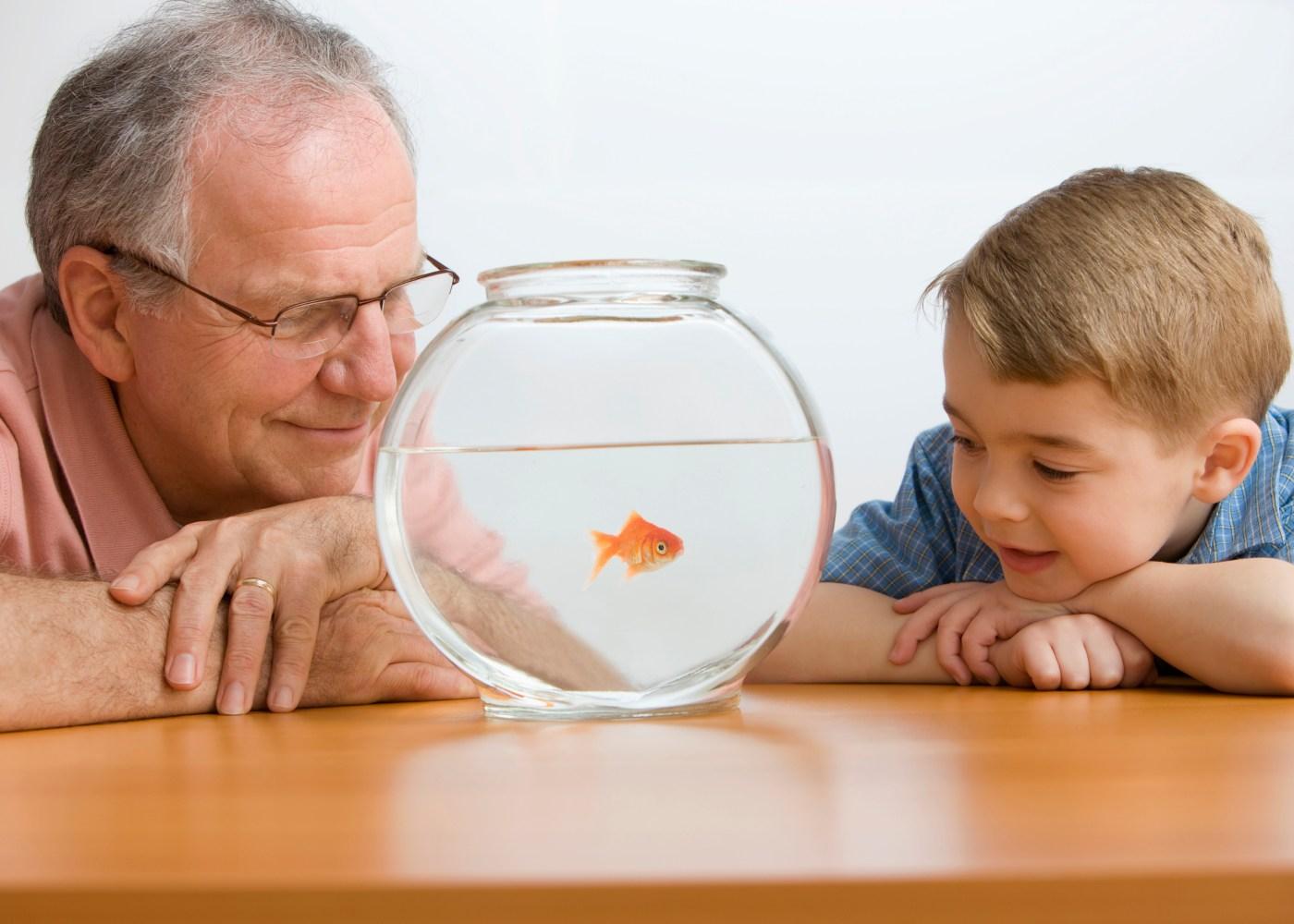Avô e neto a observar peixe no aquário