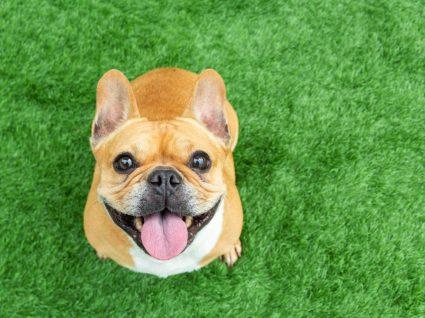 Cias que os cães odeiam e podem ser evitadas