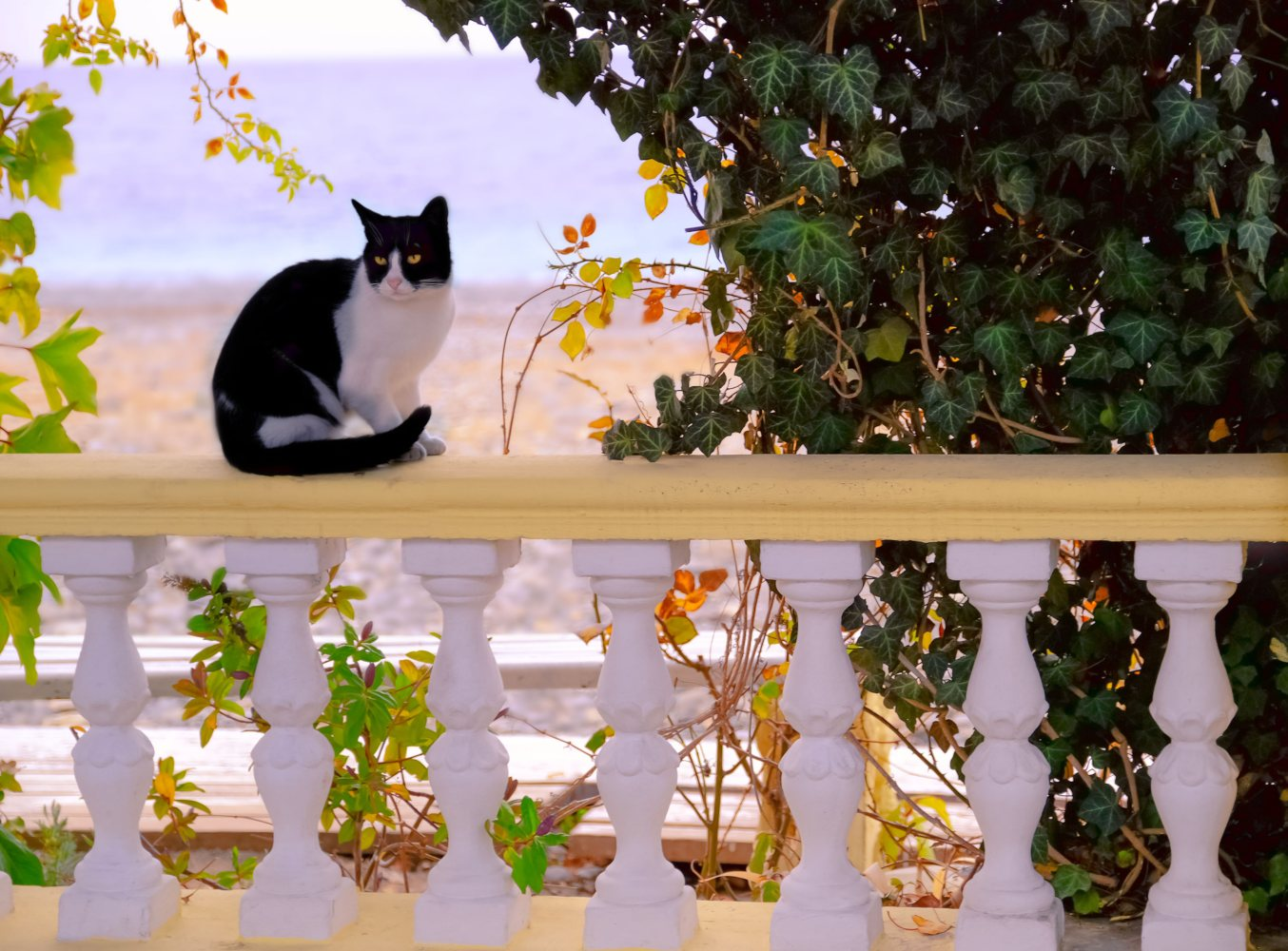Gato numa varanda