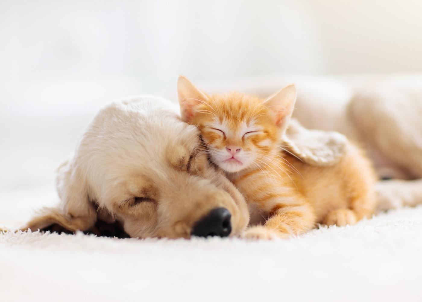 Cão e gato a dormir abraçados