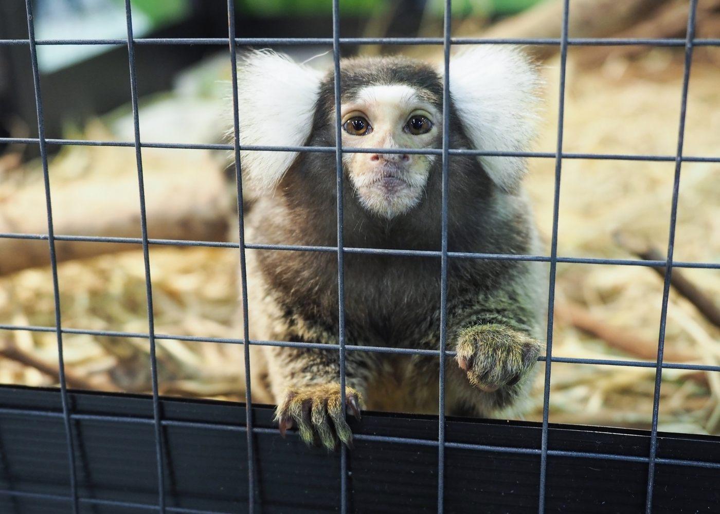 Macaco bebé numa jaula de animais exóticos