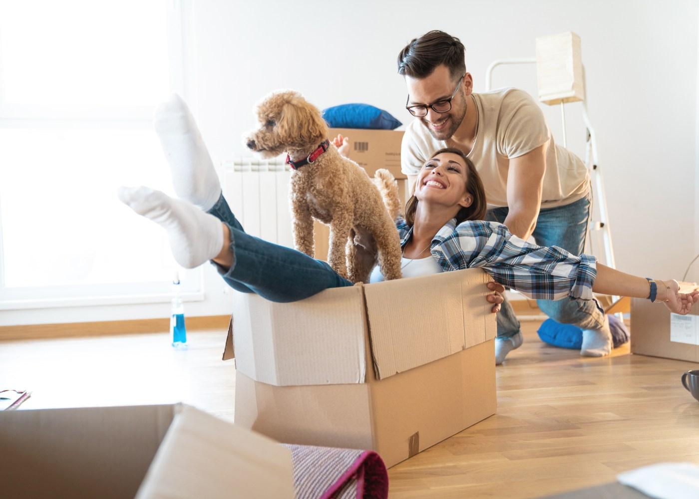 Casal com cão em apartamento
