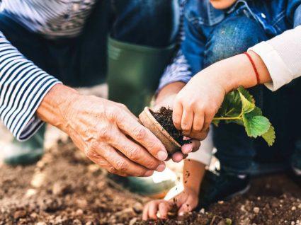 avô e neta a plantar no jardim