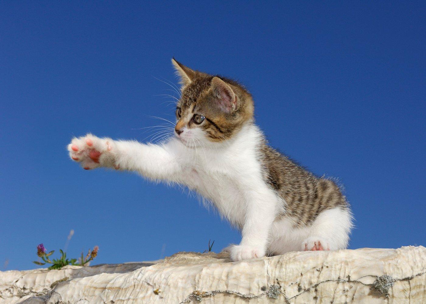 Gato a esticar a pata