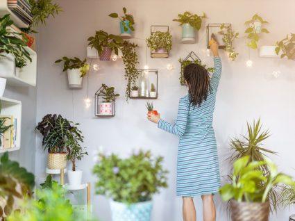 Plantas que diminuem stress