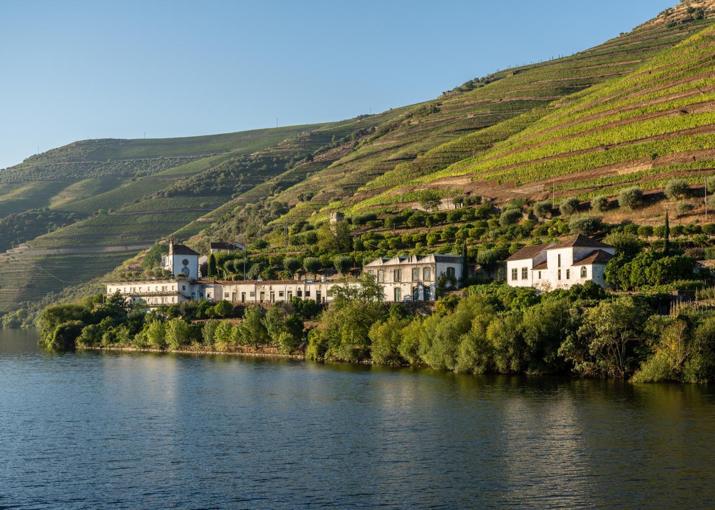 Socalcos de vinhas no Douro