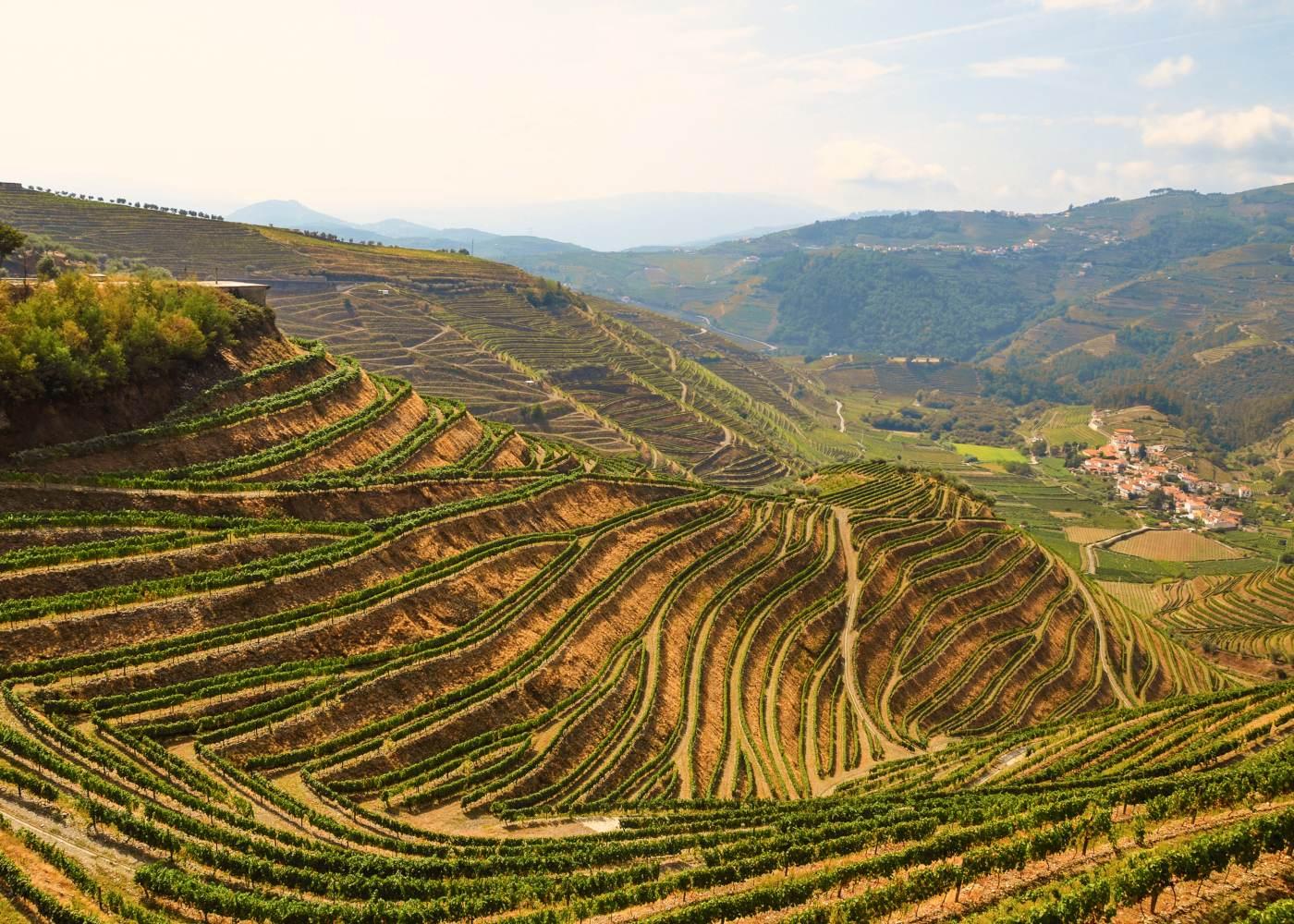 Vinhas do Douro na zona da Varosa