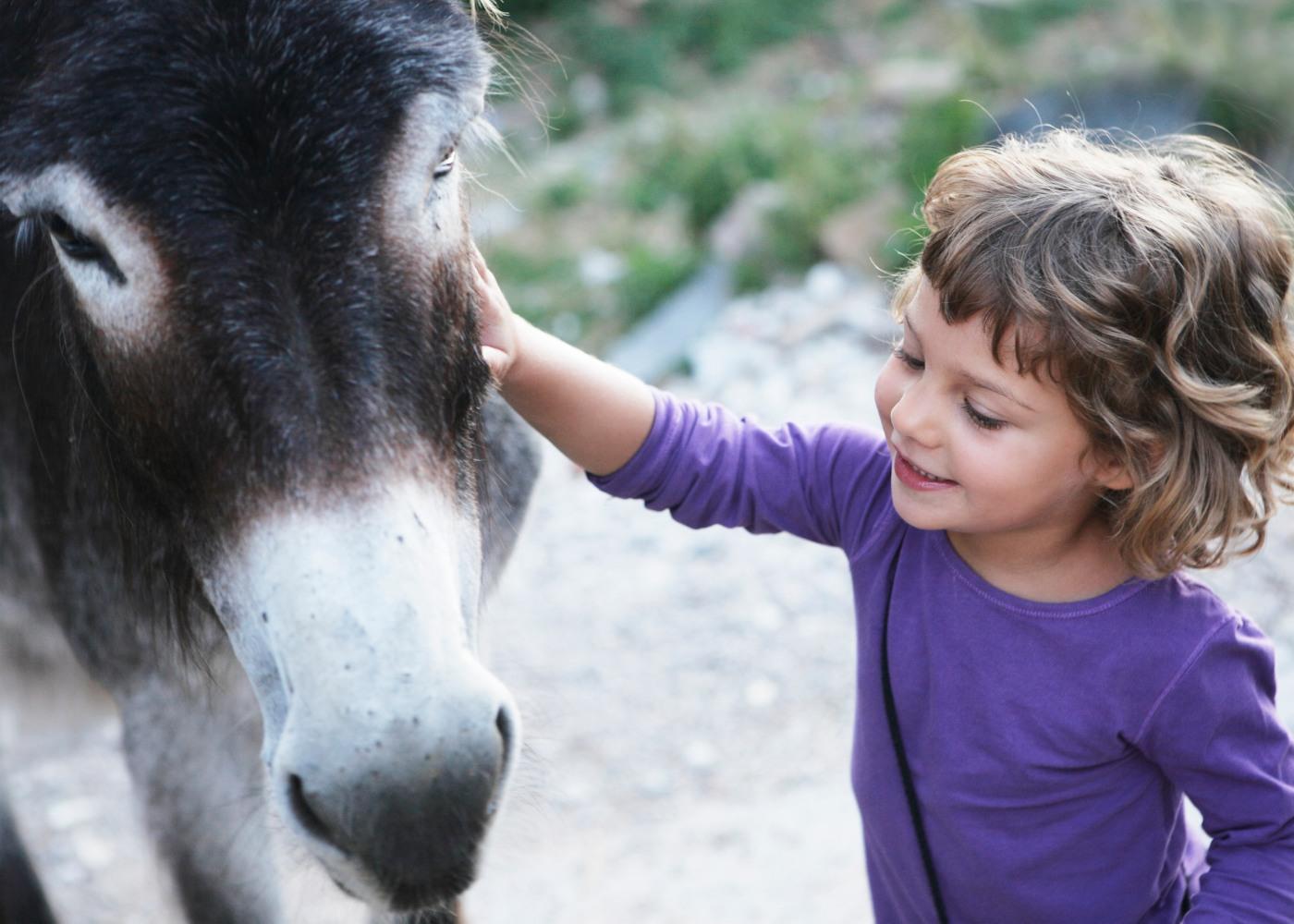 Criança a fazer festas a um burro
