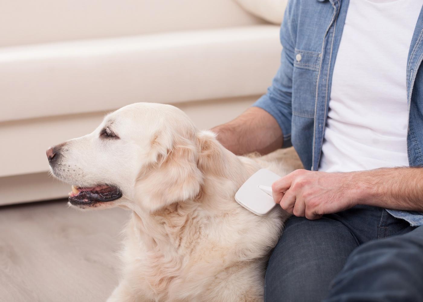 Homem a cuidar do pelo do cão