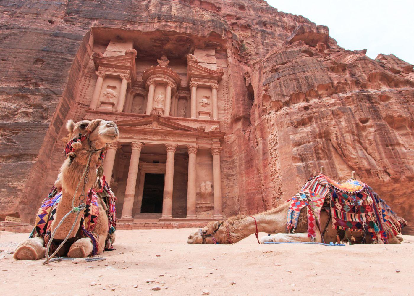 Camelos em Petra na Jordânia