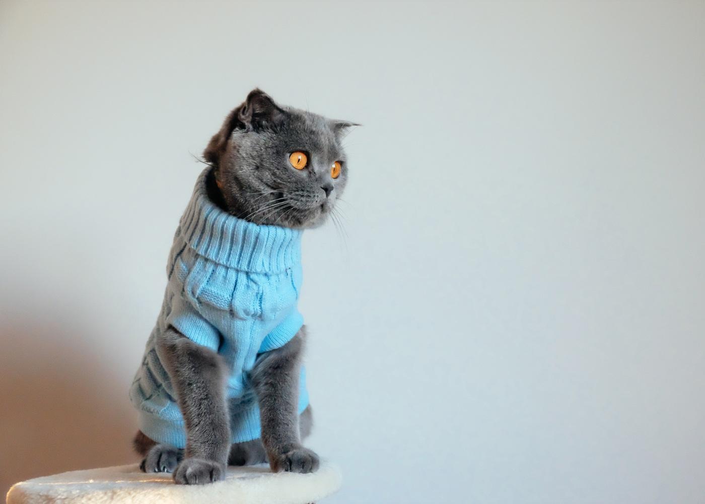 Gato com camisola de malha