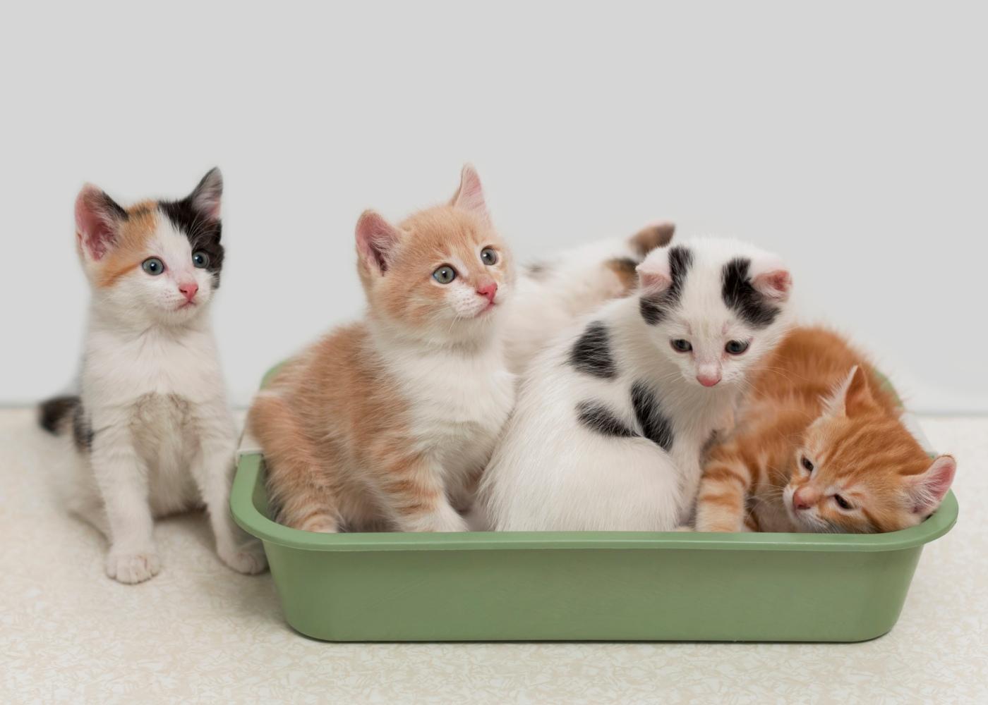 Gatos na caixa de areia