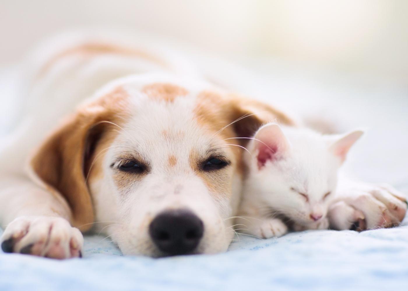 Cão e gato a dormirem aconchegados