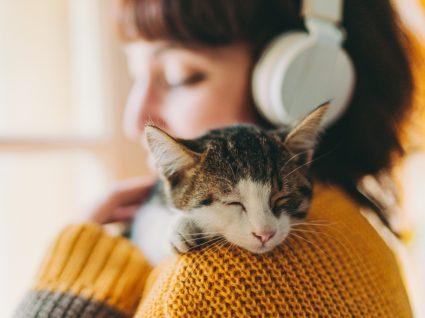 Gato relaxado no colo da tutora