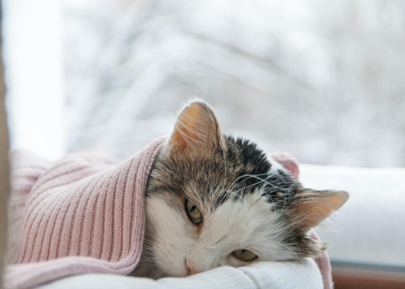 gato com frio