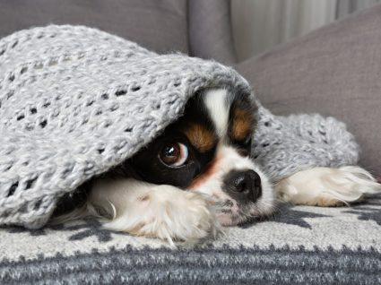 Proteger animais no frio