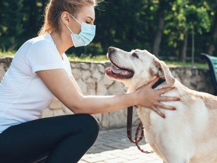 Dicas para higienizar o cão depois do passeio