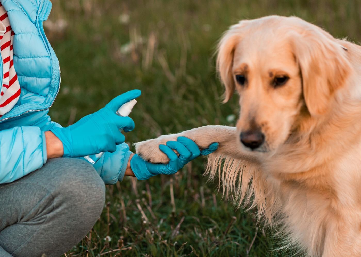 Mulher a higienizar cão