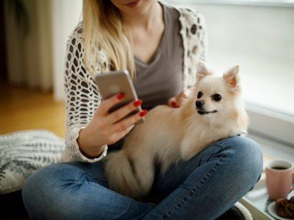 Melhores apps para tutores de animais