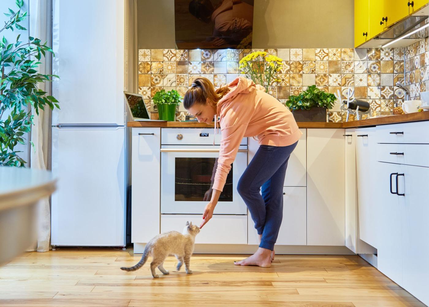ter animais em casa alugada