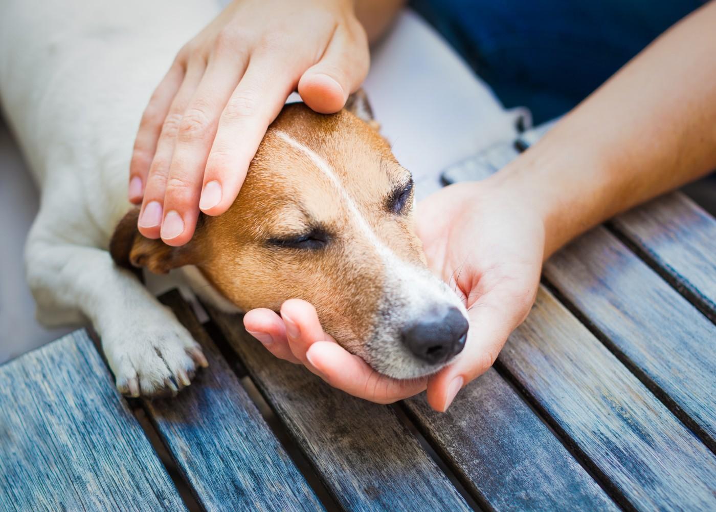 Homem a acariciar cão