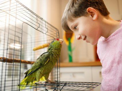 Muda das penas nas aves