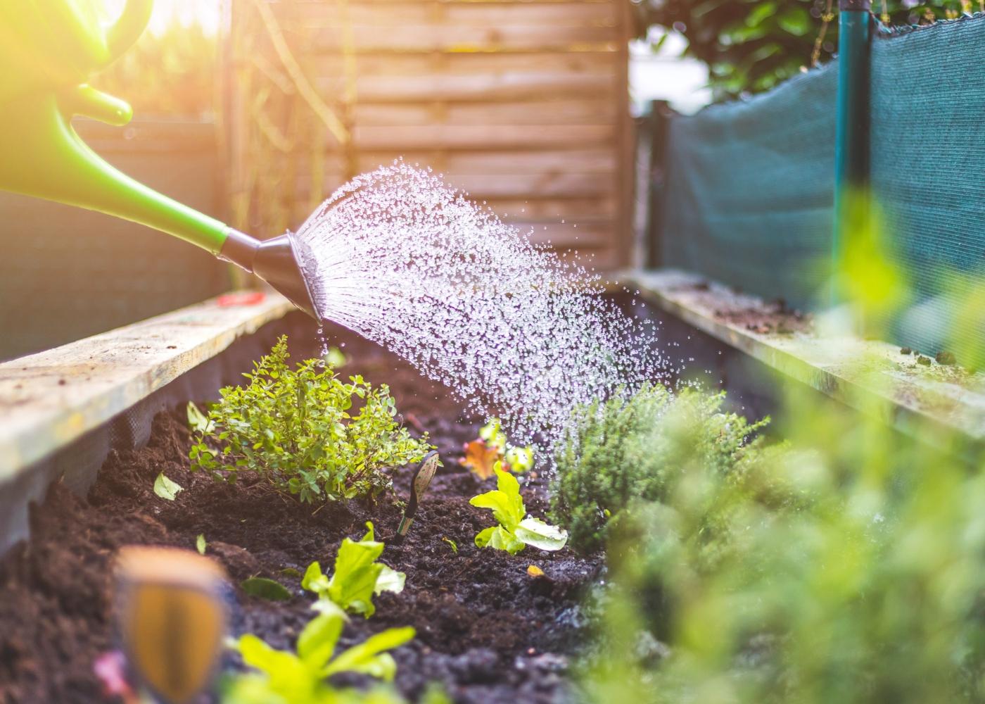 Mulher a regar plantas no jardim