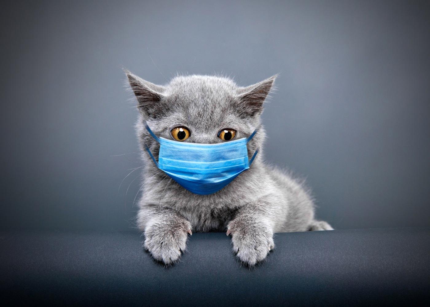 Gato com máscara