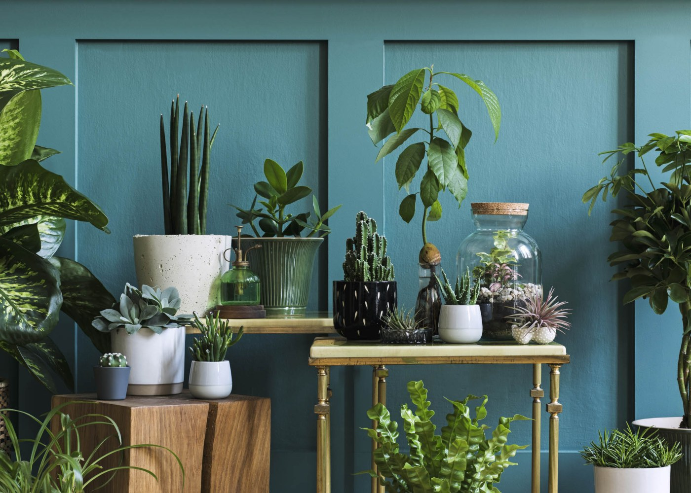 casa vasos plantas