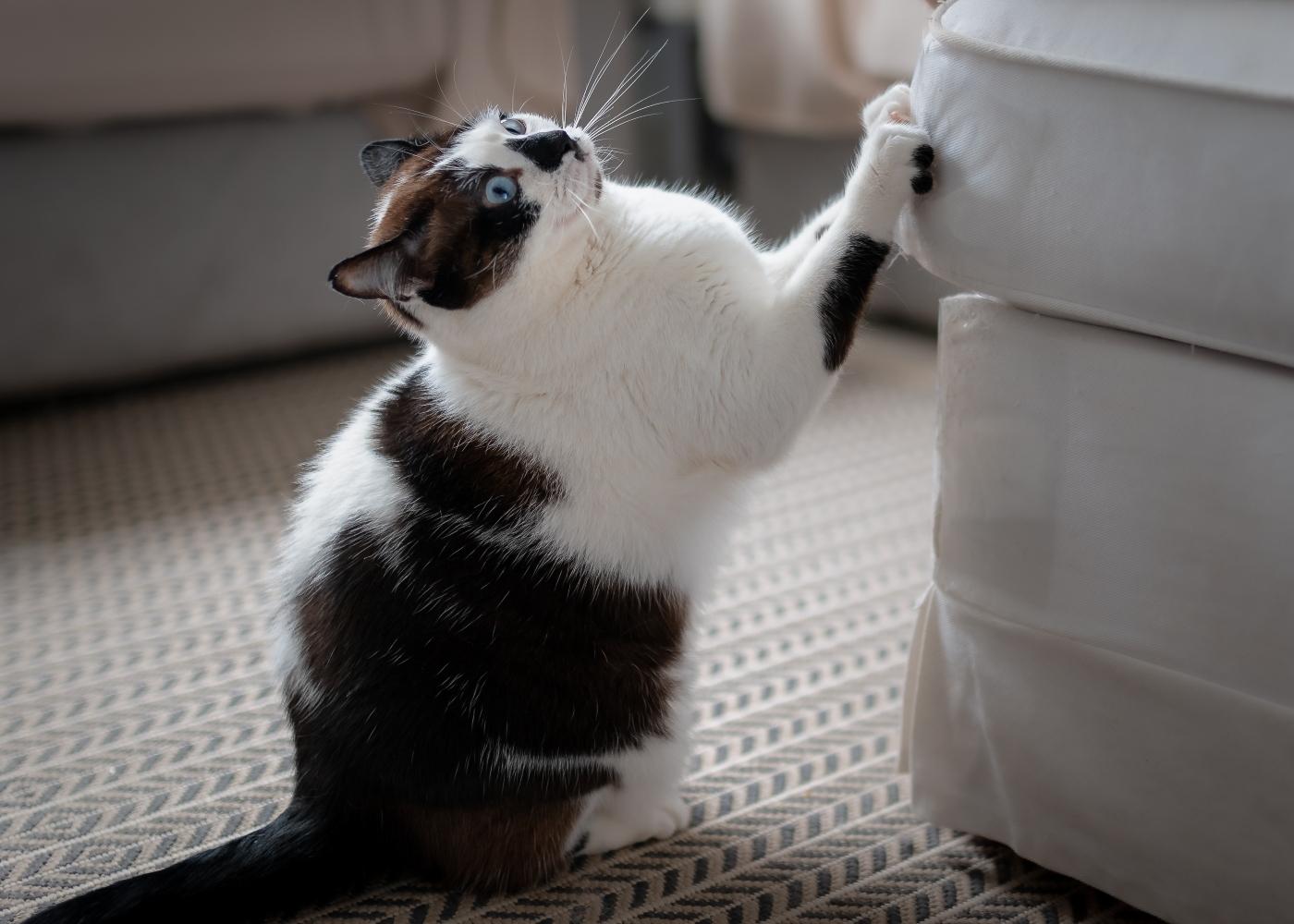 gato preto e branco a arranhar sofá cinzento