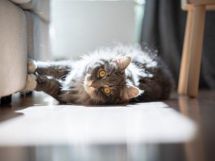 gato arranha a mobília deitado no chão