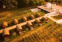 Wine Barrels da Quinta da Pacheca
