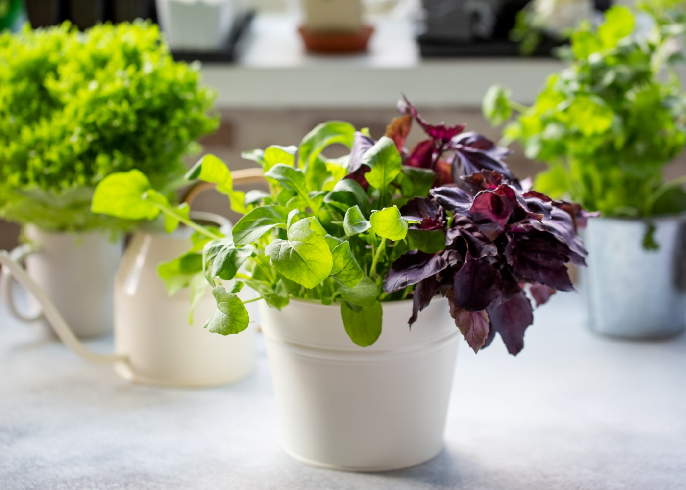 Vasos com ervas aromáticas